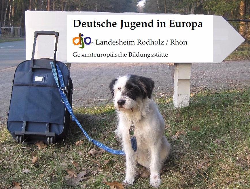 Hunde sind im djo Rodholz erlaubt